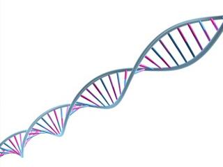 Quand les ARN peuplaient le monde…