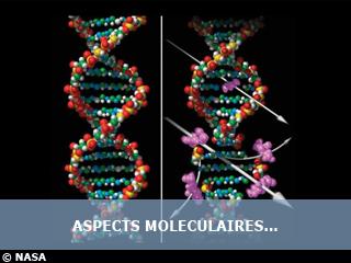 Aspects moléculaires des effets des radiations ultraviolettes et ionisantes sur l'ADN cellulaire
