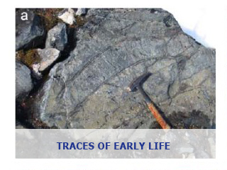 Traces of Early Life – A Geochemist's View