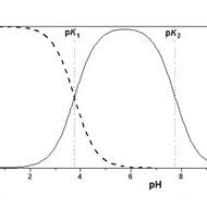 Conditions énergétiques gouvernant l'activation biochimique des acides aminés