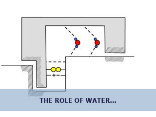 The role of water in the structure and function of biological macromolecules