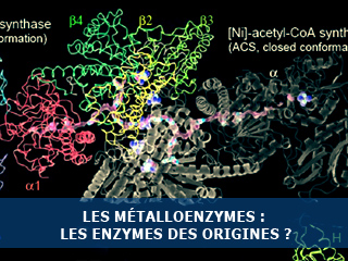 Origines de la vie et enzymes ancestrales