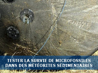 Tester la survie de microfossiles dans des météorites sédimentaires