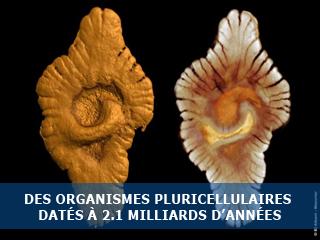 Découverte de l'existence d'une vie complexe et pluricellulaire datant de plus de deux milliards d'années