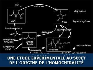 Nouvelle étude expérimentale au sujet de l'origine de l'homochiralité