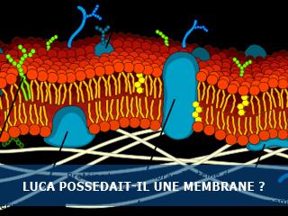 Le cenancêtre (LUCA) possédait-il une membrane ?