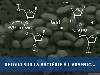 Retour sur la bactérie à l'arsenic de Wolfe-Simon et al…
