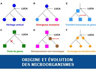 Origine et évolution des microorganismes