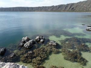 Photo du lac de cratère d'Alchichica (Mexique) où les microbialites sont particulièrement abondants (mission d'échantillonnage de mai 2014).