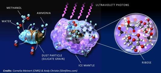 Le ribose se forme dans le manteau de glace des grains de poussière, à partir de molécules précurseurs simples (eau, méthanol et ammoniac) et sous l'effet de radiations intenses. (crédits : © Cornelia Meinert (CNRS) & Andy Christie (Slimfilms.com))