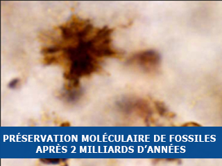 Préservation moléculaire de fossiles après 2 milliards d'années