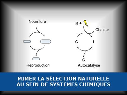 Mimer la sélection naturelle au sein de systèmes chimiques ?